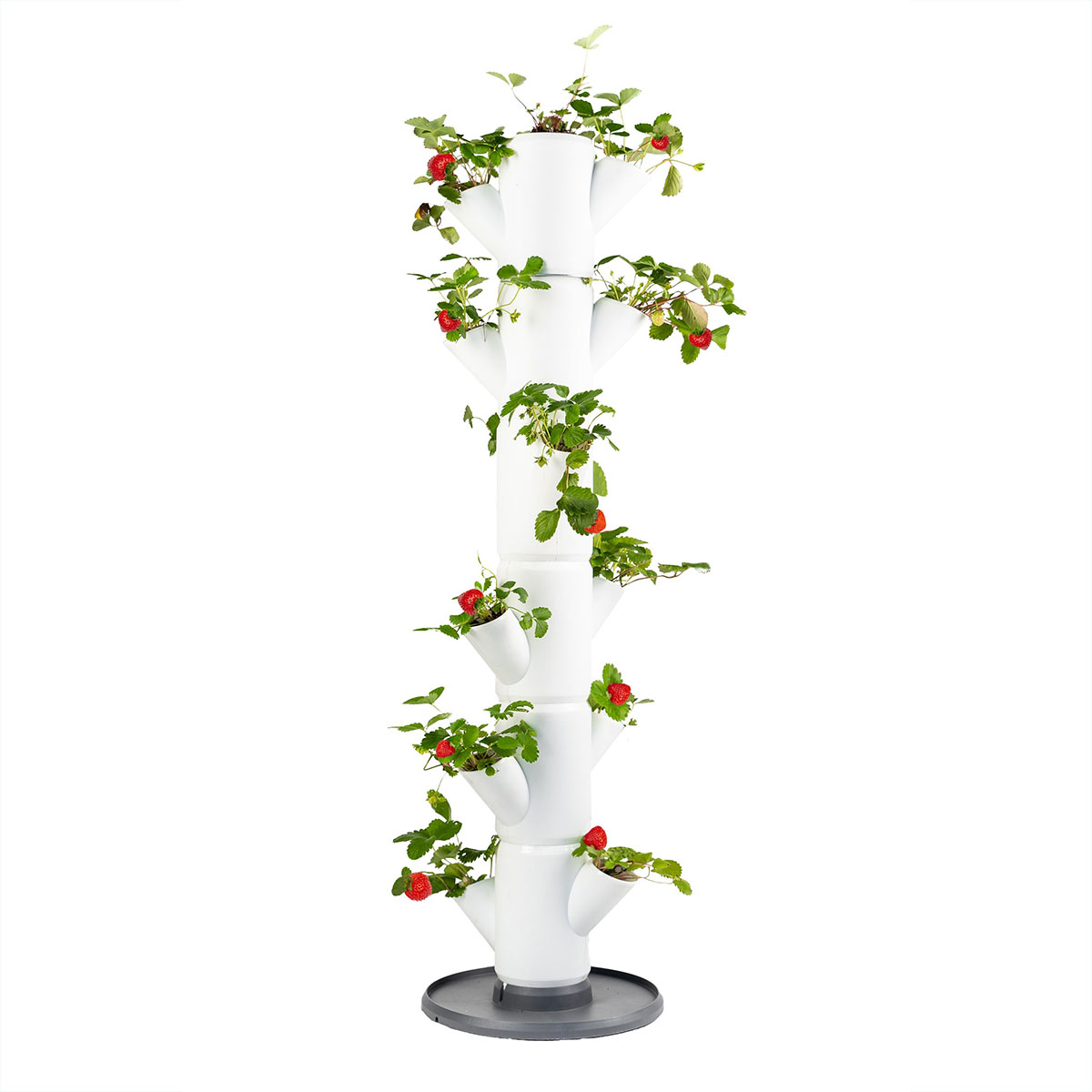 Sissi Jordbærtræ til altan eller terrasse