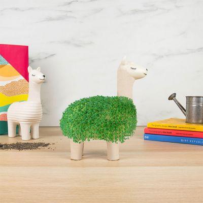 Lama med naturlig pels