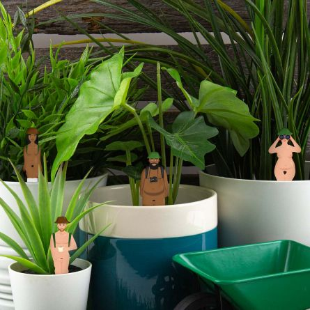 Nøgne vandrere til potteplanter