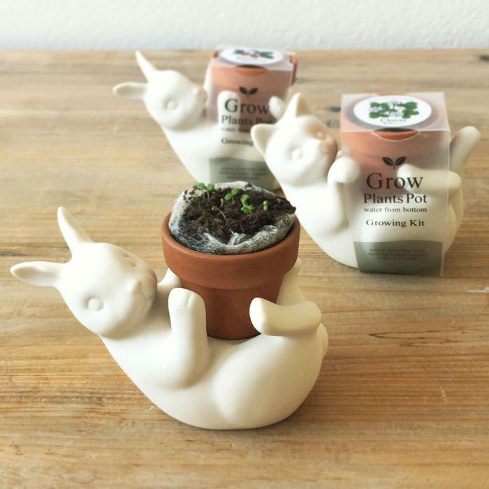 Potteplante-venner Kat & Hare