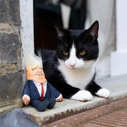 Præsidenten kattelegetøj