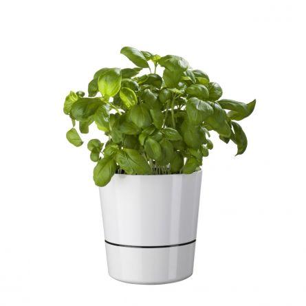 Herb Hydro blomsterkrukke