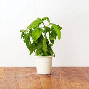 Genopfyldnings pakker til Click & Grow Smarter urtehave til indendørs