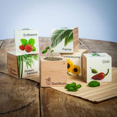 Valentinsdags gaver - Ecocube - plante i trækube