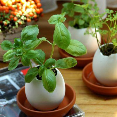 Mad & Drikke - Eggling - Krydderurte-æg