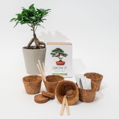 30 års fødselsdagsgave - Grow It Bonsai-træer